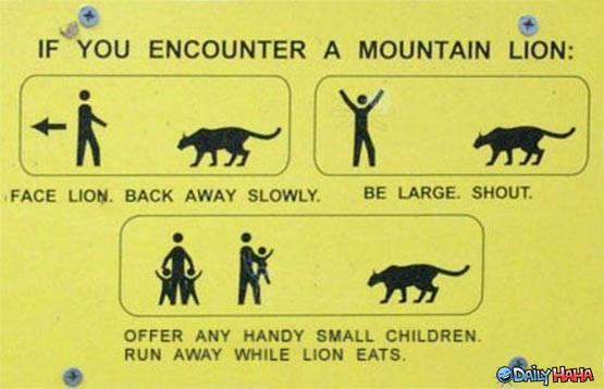 Mountain Lions: Who's seen one?-o5kogx.jpg
