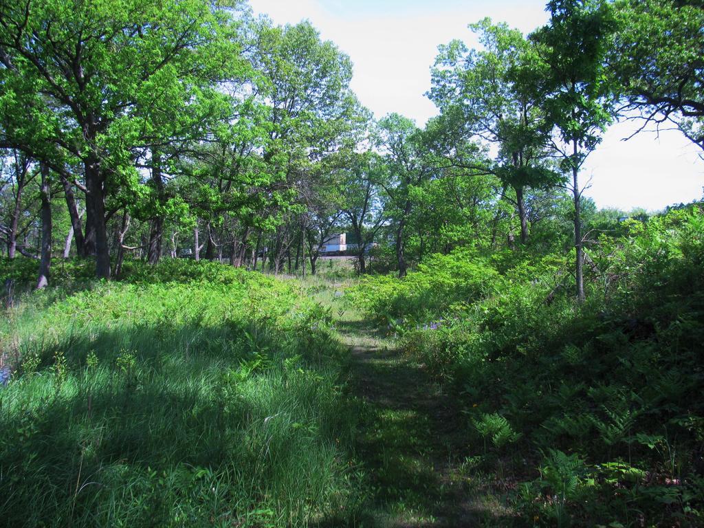 Botany Thread-oak-savanna-trains.jpg