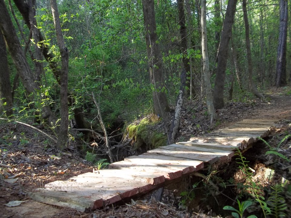 Building stunts with forest lumber only-oakbridge.jpg