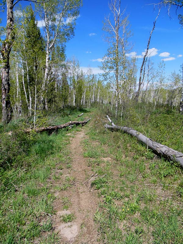 Trail Pics-oakcrkrd3.jpg