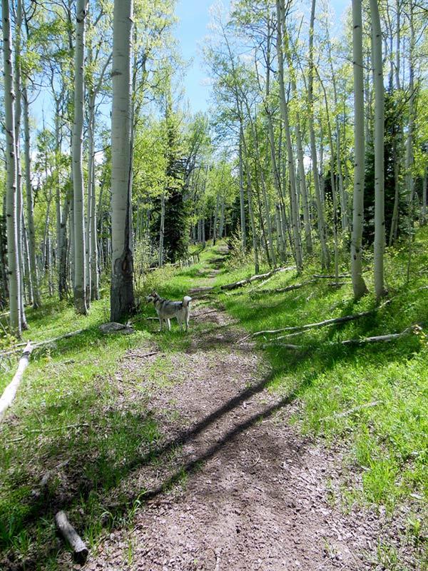 Trail Pics-oakcrkrd5.jpg