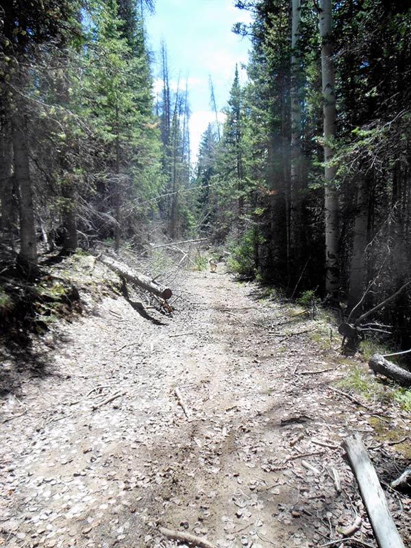 Trail Pics-oakcrkrd6.jpg
