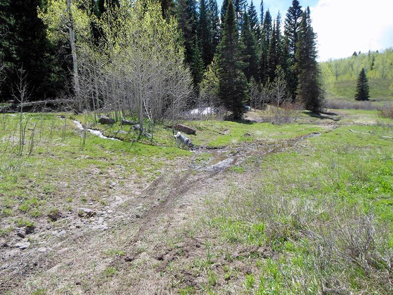 Trail Pics-oakcrkrd7.jpg