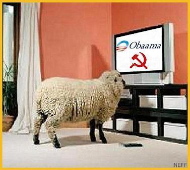 Name:  obamasheep.jpg Views: 414 Size:  23.2 KB