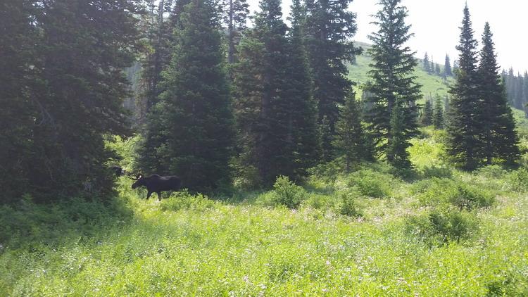 animal encounters-off-trail-resize.jpg