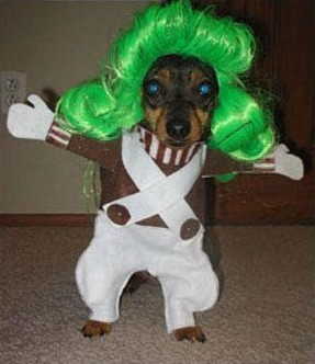 Name:  oompa_loompa_dog.jpg