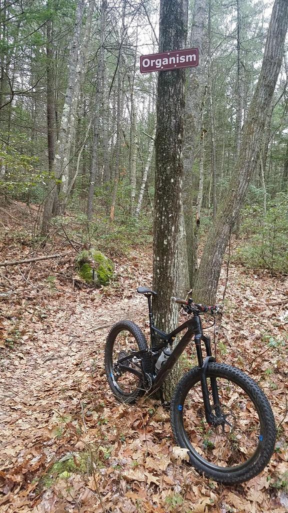 Bike + trail marker pics-orgasm.jpg