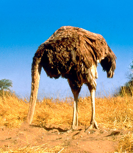LANDIS and LANCE DOPING? GTFO-ostrich.jpg