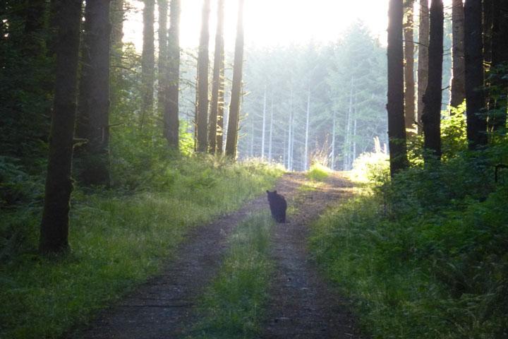 Grand Ridge Bears-p1000079-web.jpg