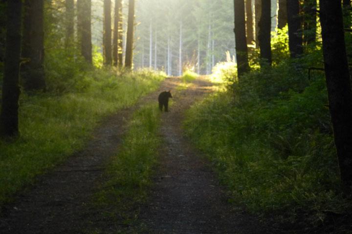 Grand Ridge Bears-p1000080-web.jpg