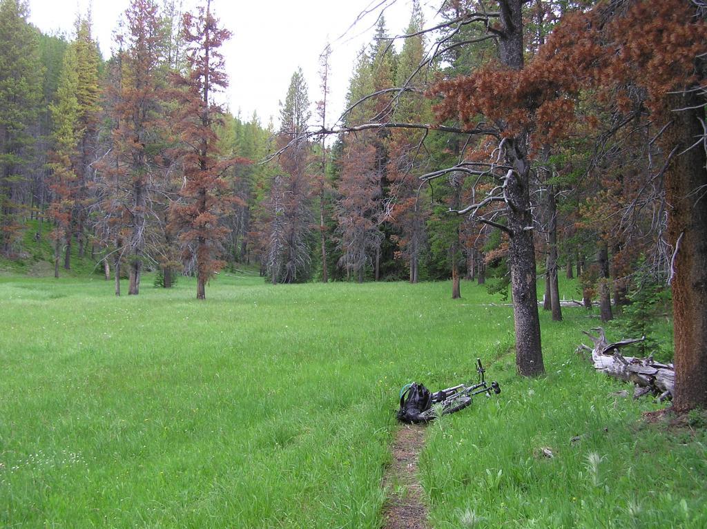 Ruby Creek/Butler Creek Loop aka Mosquito Mania-p1010002.jpg