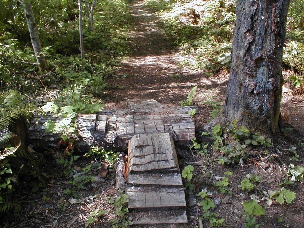 Little kid friendly trail-p1010008-2-.jpg