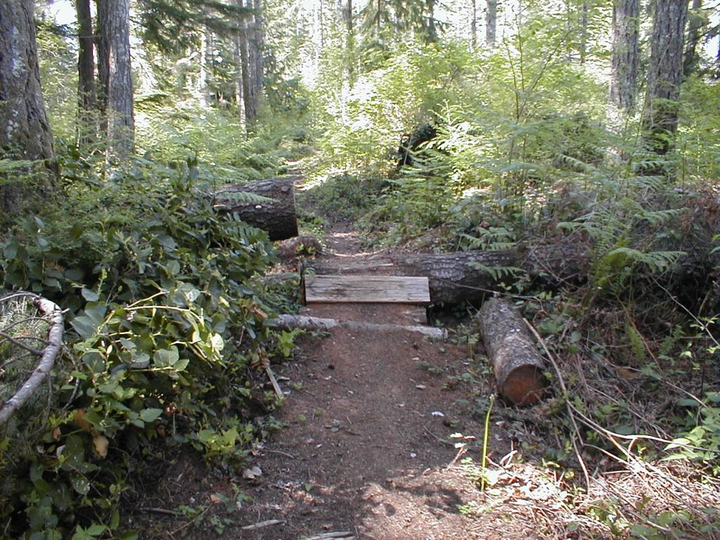 Log ramps: Good? Bad? And how best to build them?-p1010011-4-.jpg