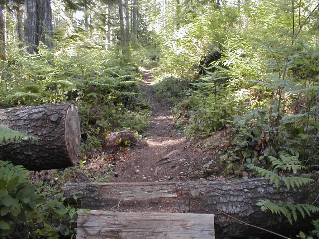 Log ramps: Good? Bad? And how best to build them?-p1010012-3-.jpg