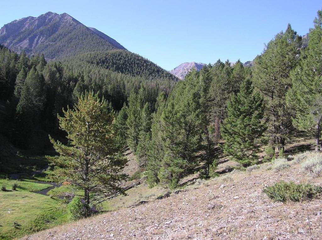 Grouse Creek Trail, Pahsimeroi Range, Idaho-p1010013.jpg