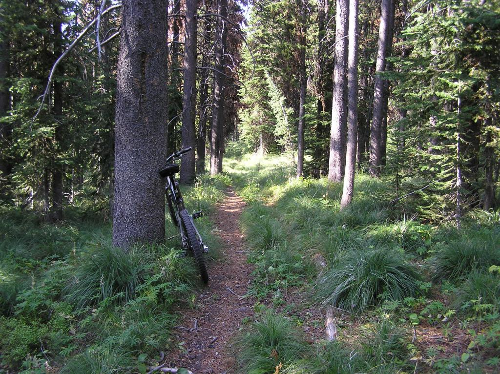 Stateline Divide -Twin Creeks Ridge Trail off Lost Trail Pass-p1010014.jpg