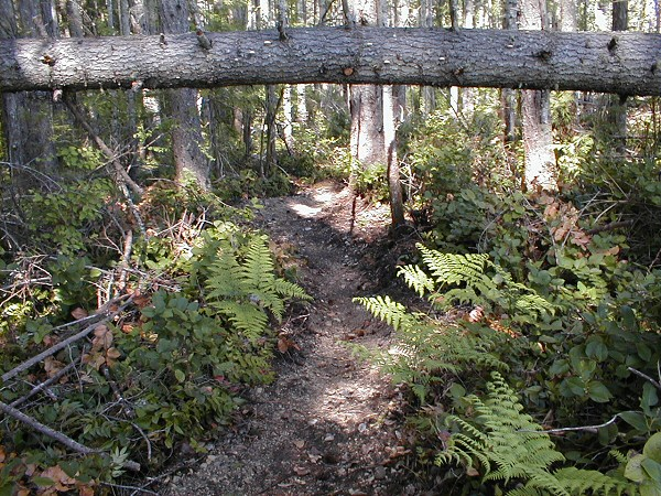 Example of Filters and Signage for Advanced Trails and Skill Areas-p1010015-7-.jpg