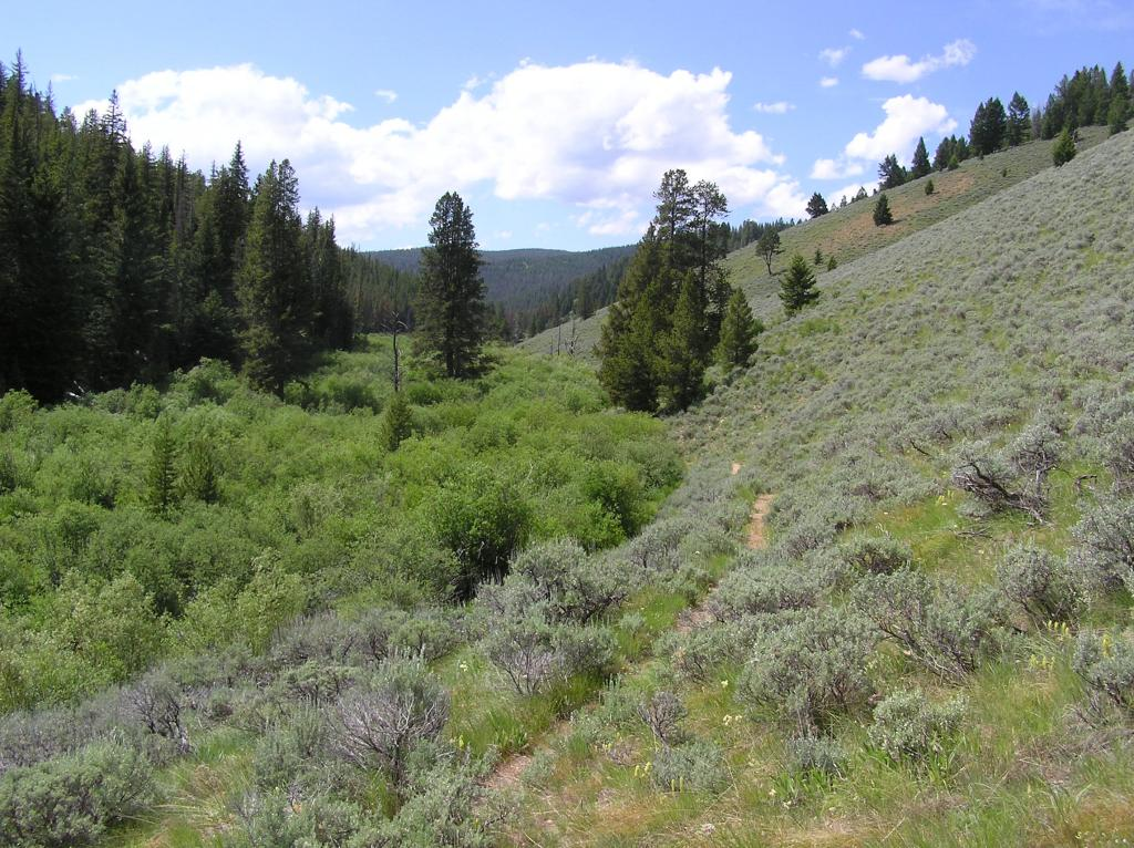 Ruby Creek/Butler Creek Loop aka Mosquito Mania-p1010015.jpg
