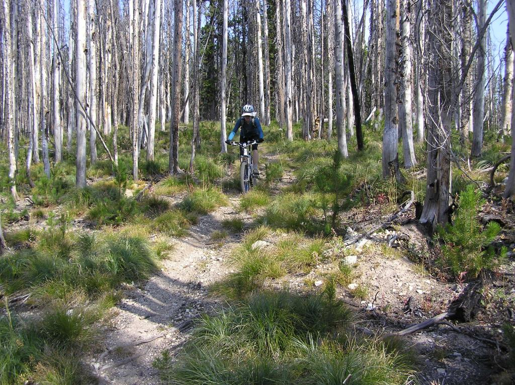 Stateline Divide -Twin Creeks Ridge Trail off Lost Trail Pass-p1010016.jpg