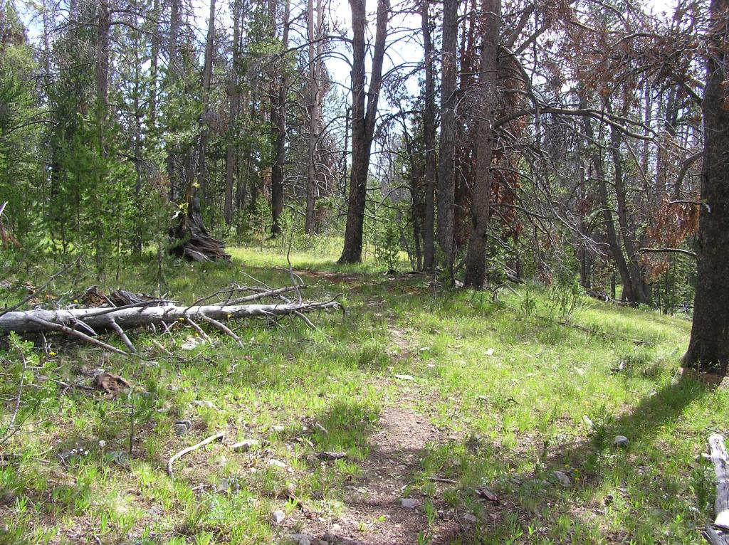 CDT-Grizzly Hill Area, Leadore, ID-p1010099.jpg