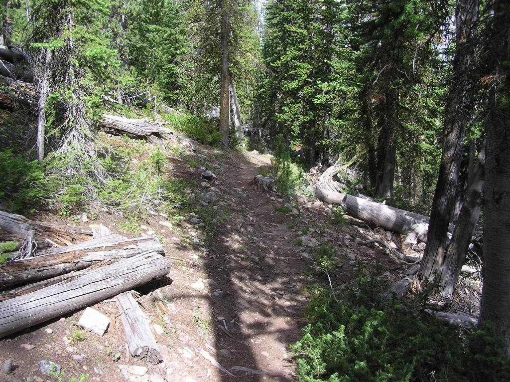 CDT-Grizzly Hill Area, Leadore, ID-p1010100.jpg