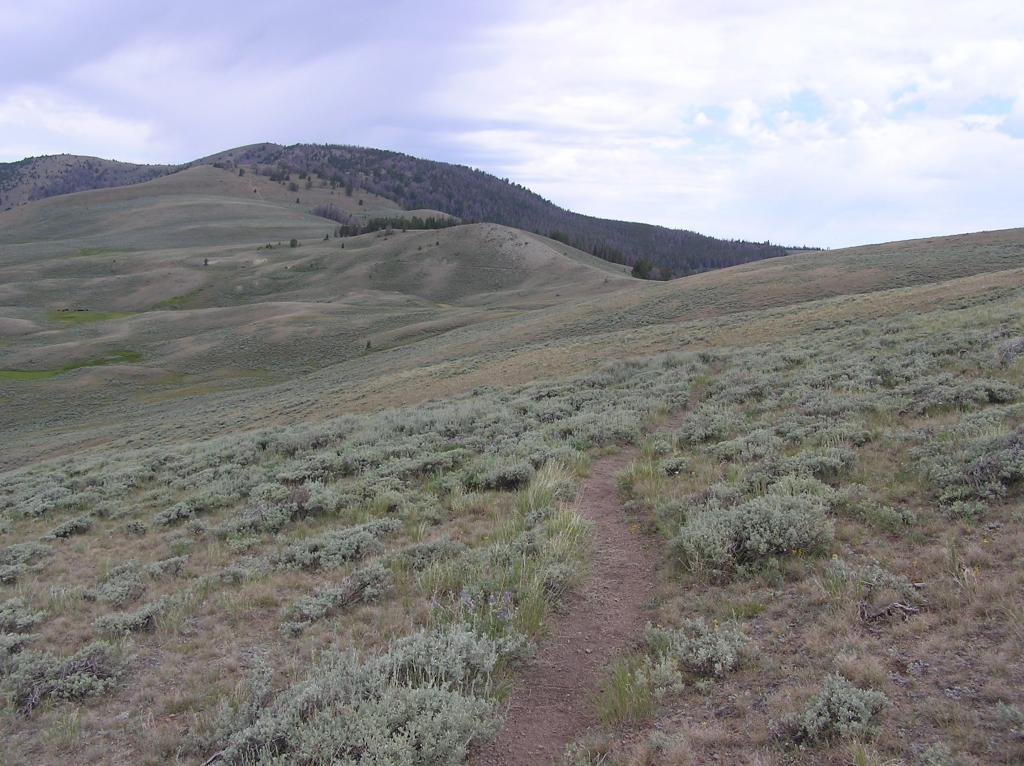 CDT-Grizzly Hill Area, Leadore, ID-p1010105.jpg