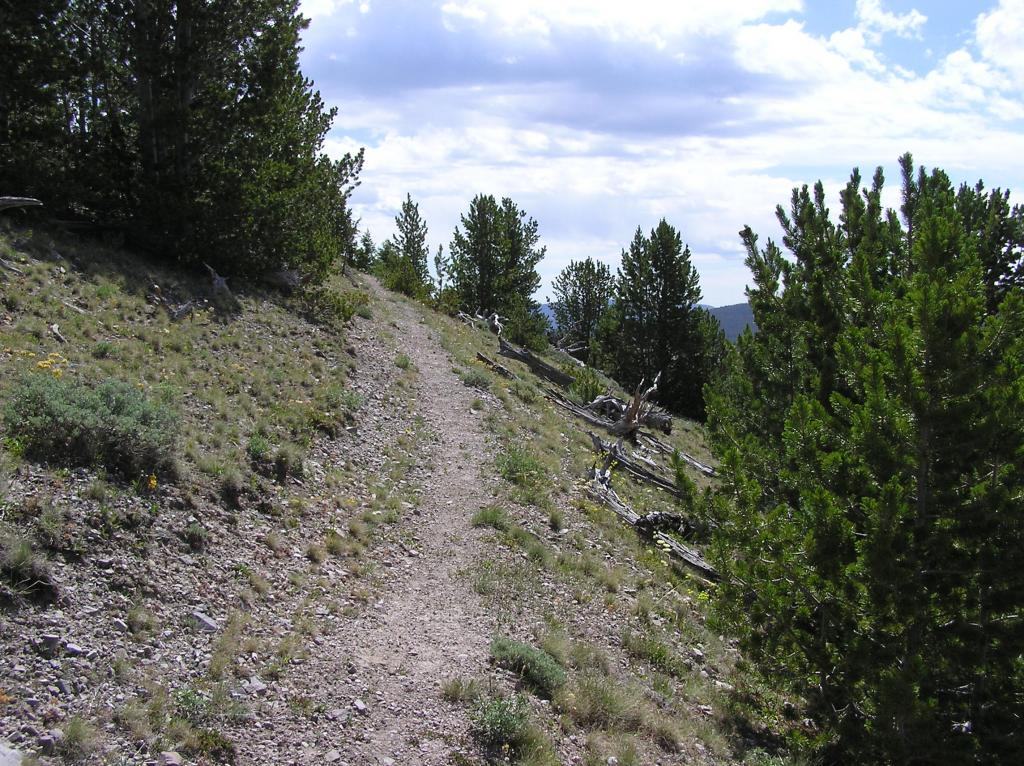 CDT-Grizzly Hill Area, Leadore, ID-p1010110.jpg