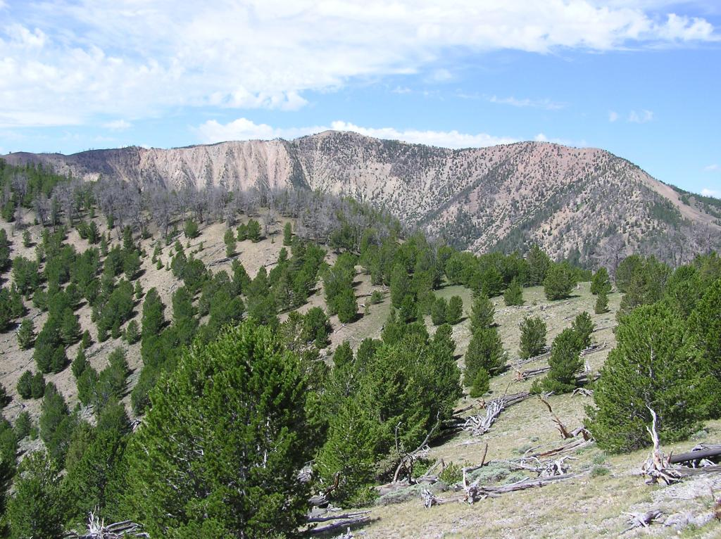 CDT-Grizzly Hill Area, Leadore, ID-p1010113.jpg