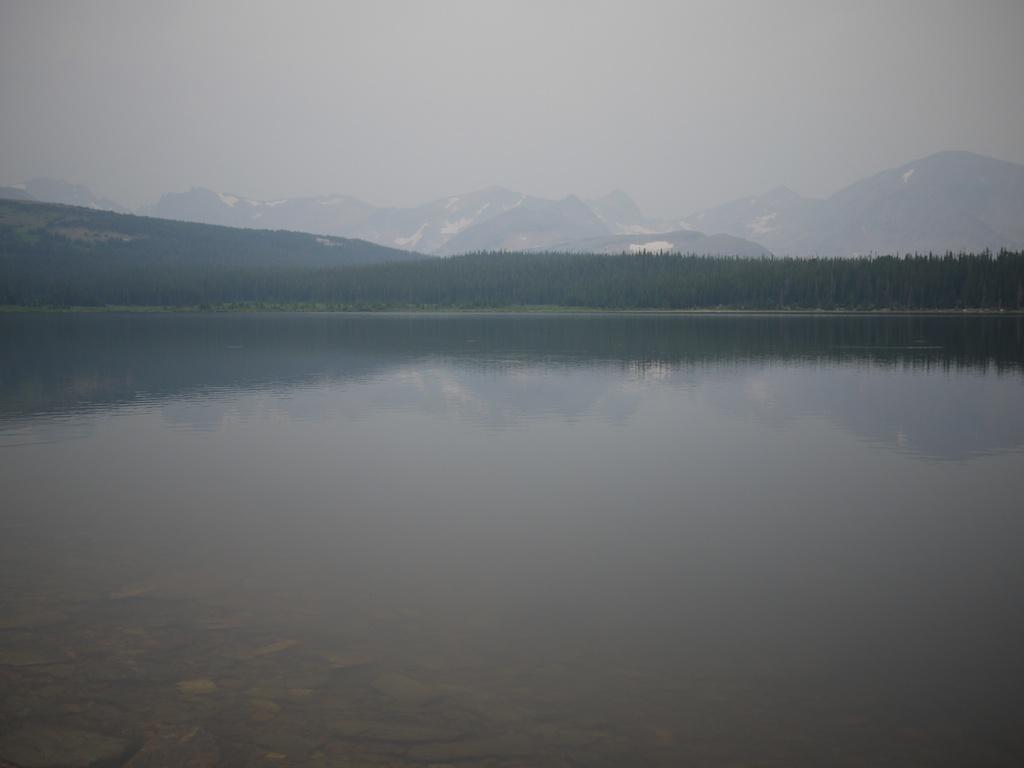 Murky moose-p1010385.jpg