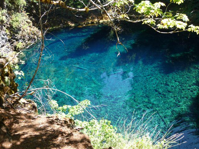 McKenzie River Trail, Oregon-p1010830.jpg