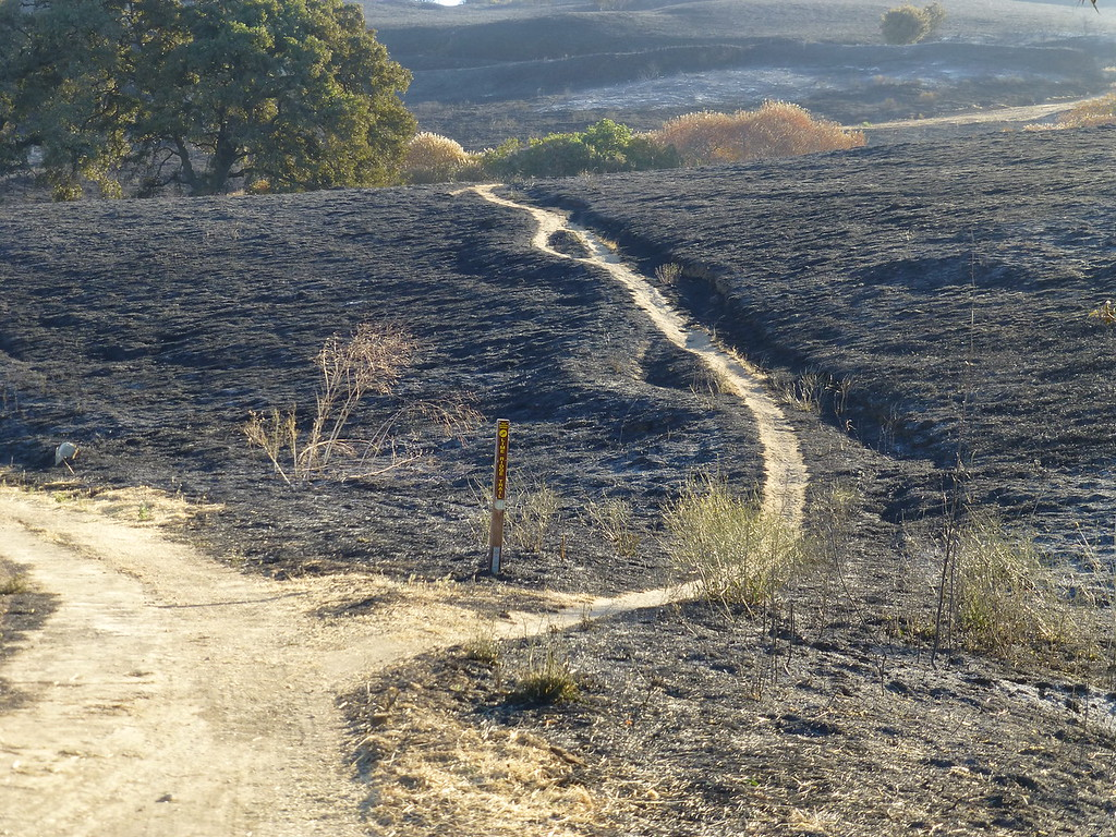 Bummer of a PSA. Lime Ridge is burning.-p1020807-xl.jpg