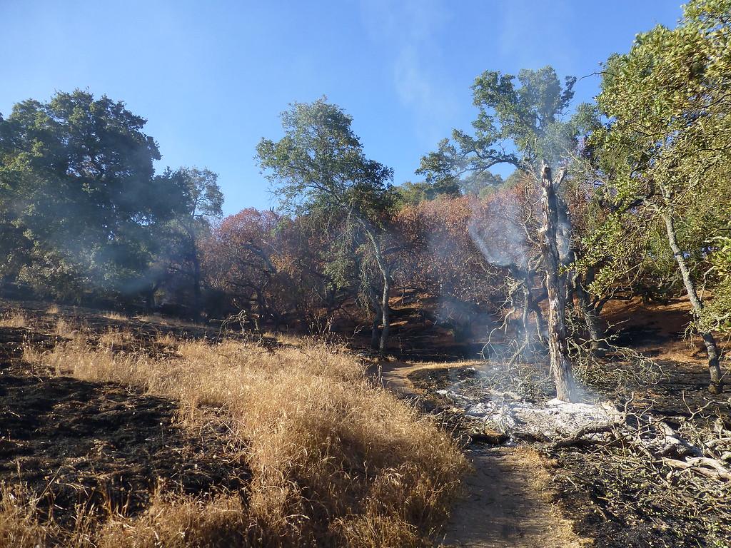 Bummer of a PSA. Lime Ridge is burning.-p1020813-xl.jpg