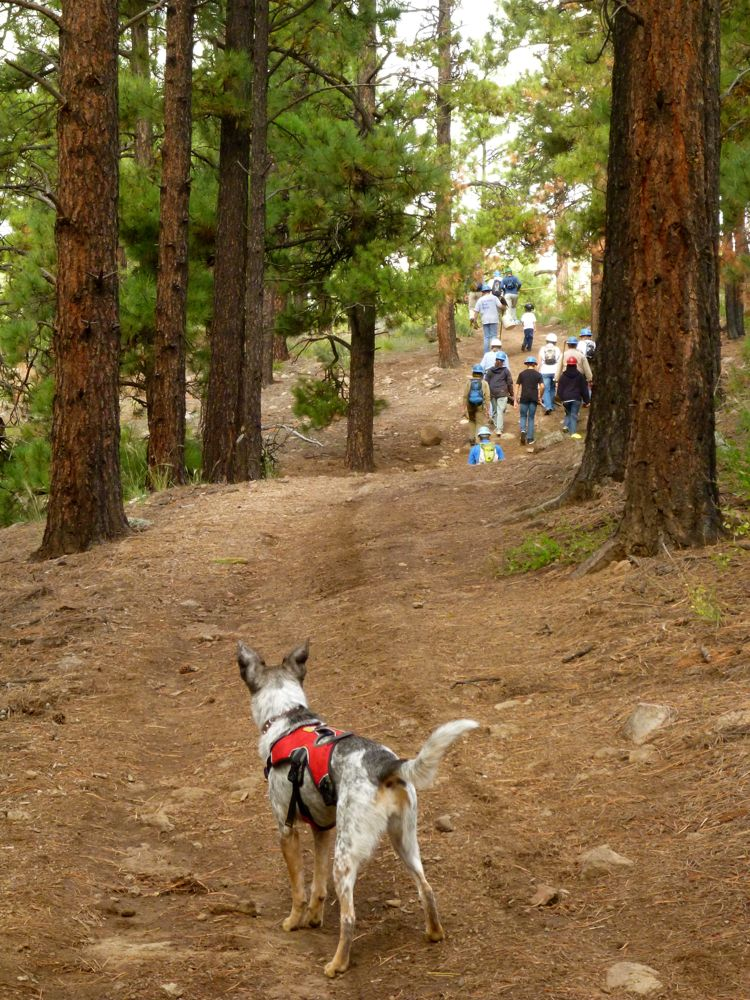 Did You Sign-Up for Any Trail Improvent Projects This Weekend?-p1020836.jpg