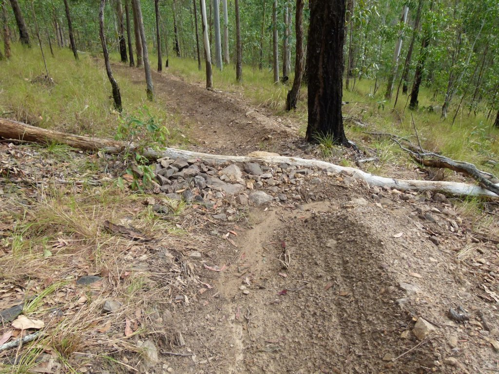 Sterilized Singletrack: A Spreading Epidemic-p1020886.jpg