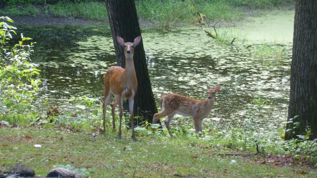 animal encounters-p1030642a.jpg