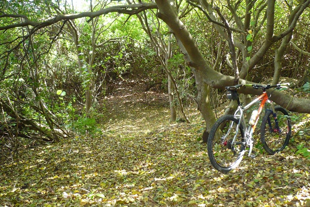 Most UNDER rated Mountain Bike destination /town?-p1060565.jpg