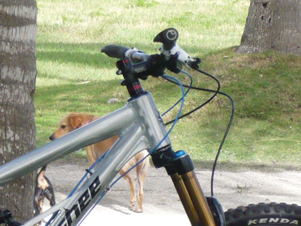 Is it the bike?-p1070144c.jpg