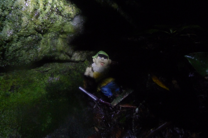 Adventures with the Pisgah Gnome-p1100928.jpg