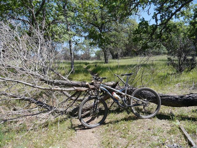 "Pliny's ""Tree Down at Henry W Coe SP"" Contest.-p1120091%25u00252520copy.jpg"