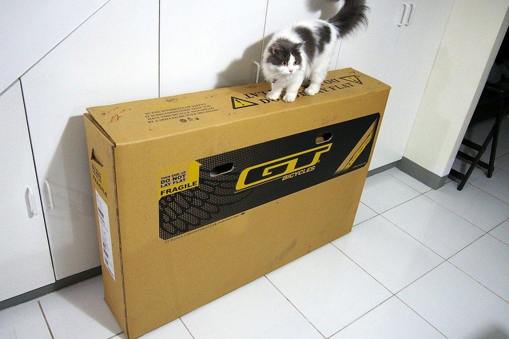 GT Sanction -- 650b-p2110224.jpg