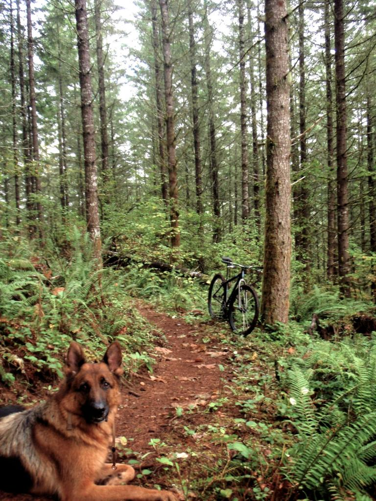 headed down to St. Paul, OR. Places to ride?-p3040055-copy.jpg