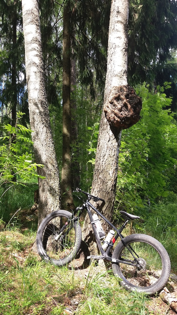 Daily fatbike pic thread-p5pb17379784.jpg