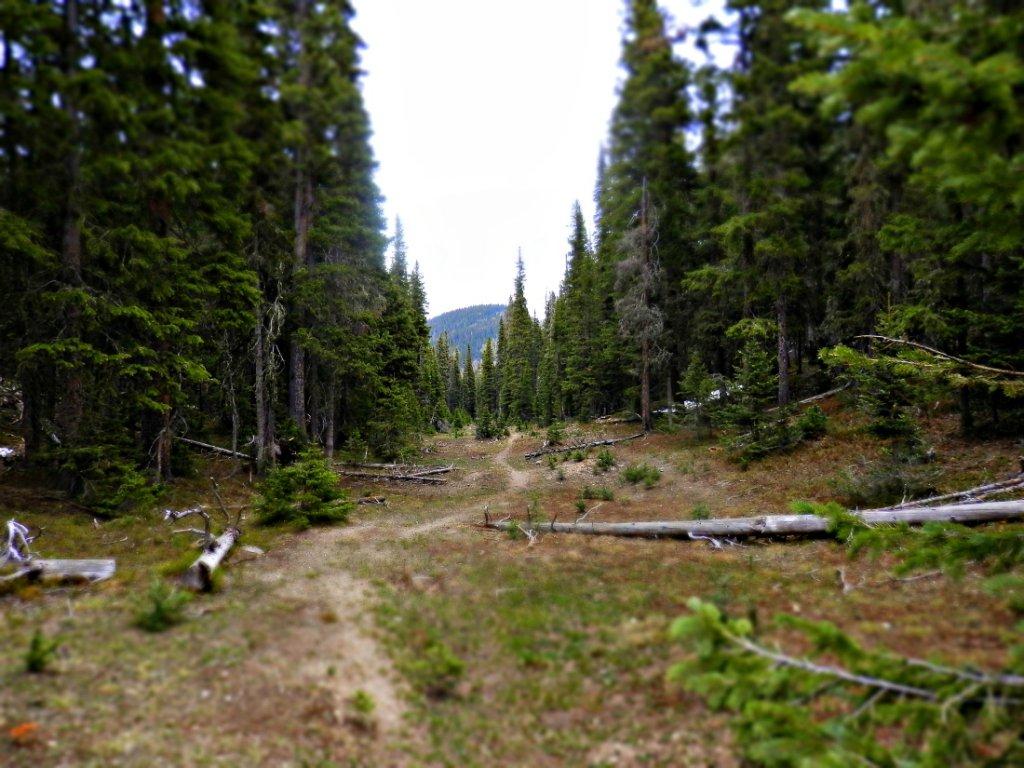 The NM Trail Pix Thread-p6055713.2.jpg