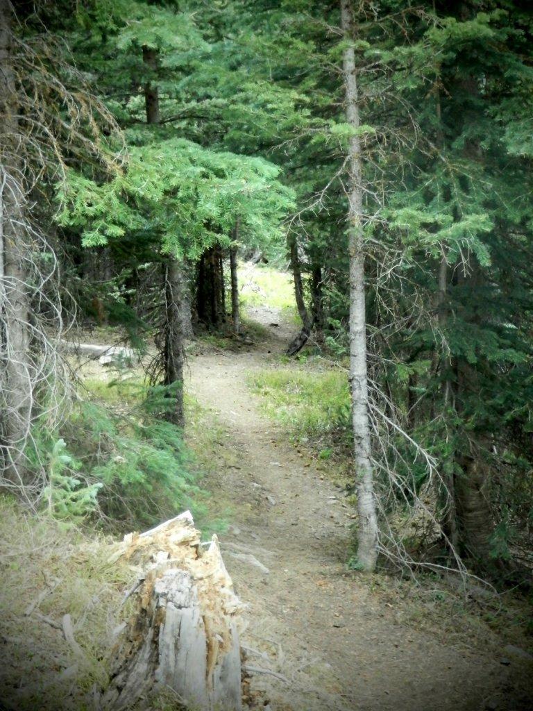 The NM Trail Pix Thread-p6055796.2.jpg