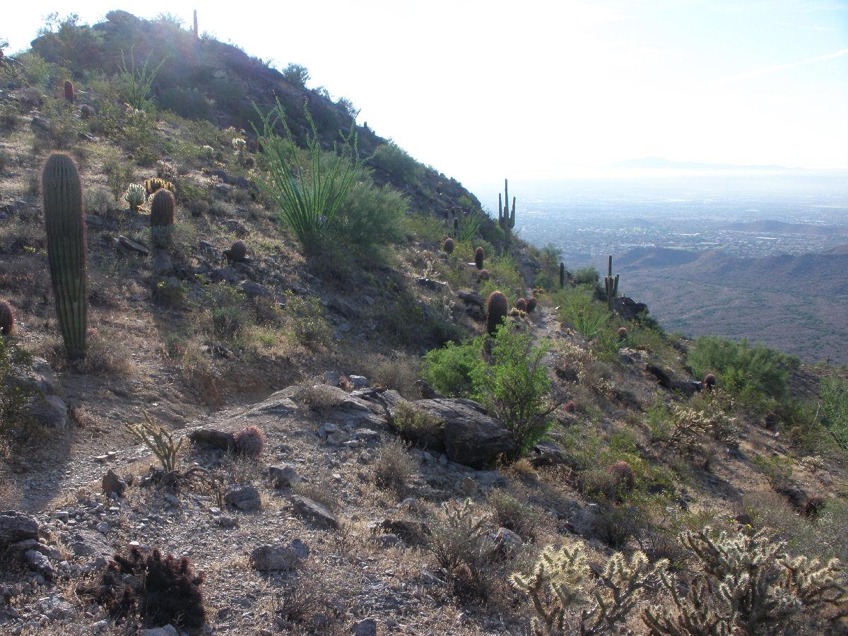 Pics from SoMo Corona De Loma trail!-p8220039mtbr.jpg
