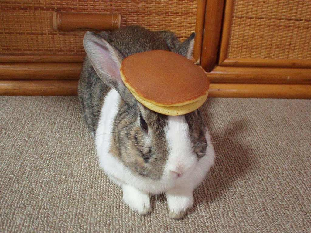 Getting ready for The Appetite Seminar!-pancake_bunny.jpg