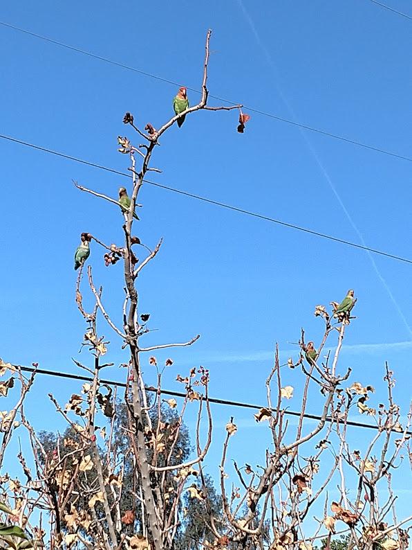 The Bird Thread...-parrots.jpg