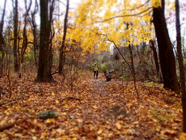 Post Pics of your Fall Foliage!!-pb115801.jpg