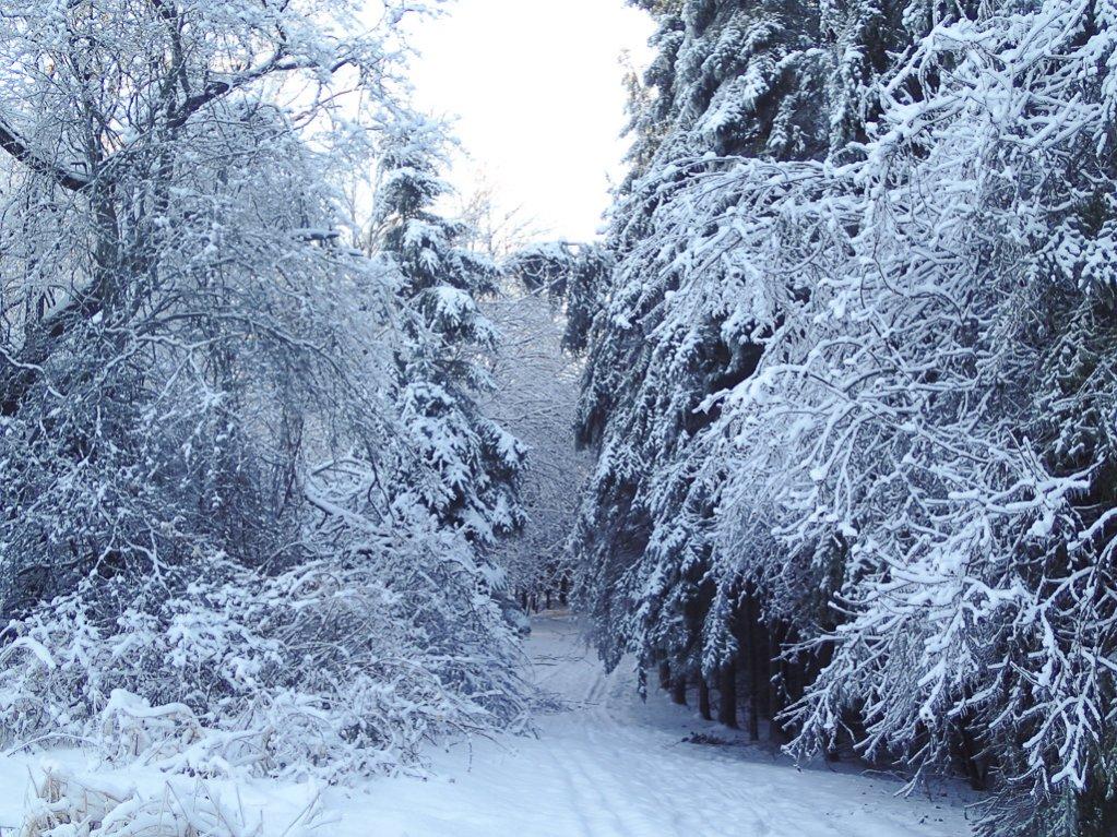 2014 Winter Fatbike Picture Thread-pc240014.jpg