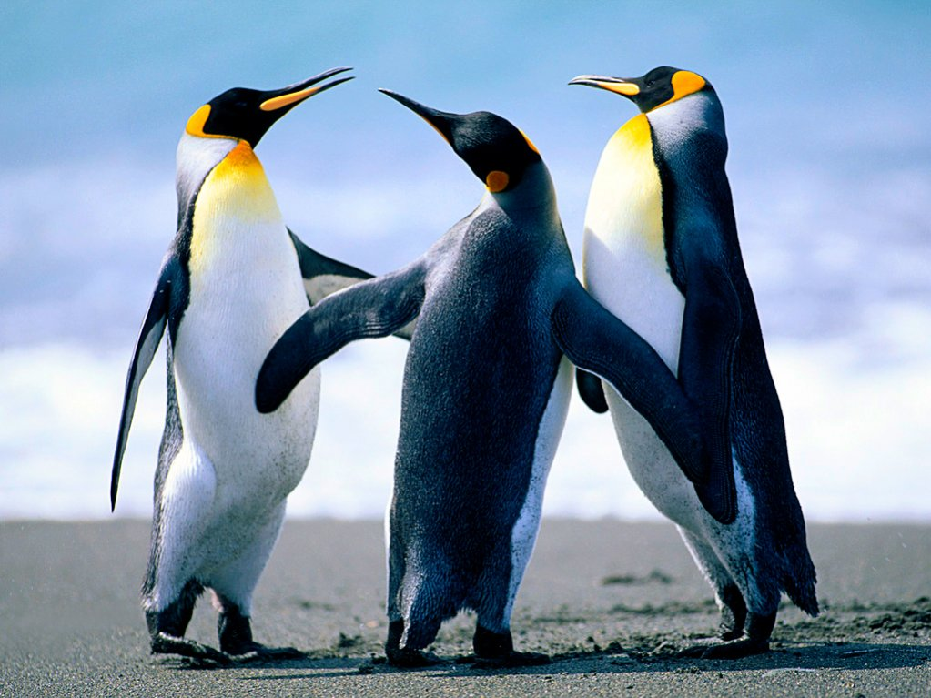 photo upload test-penguins.jpg